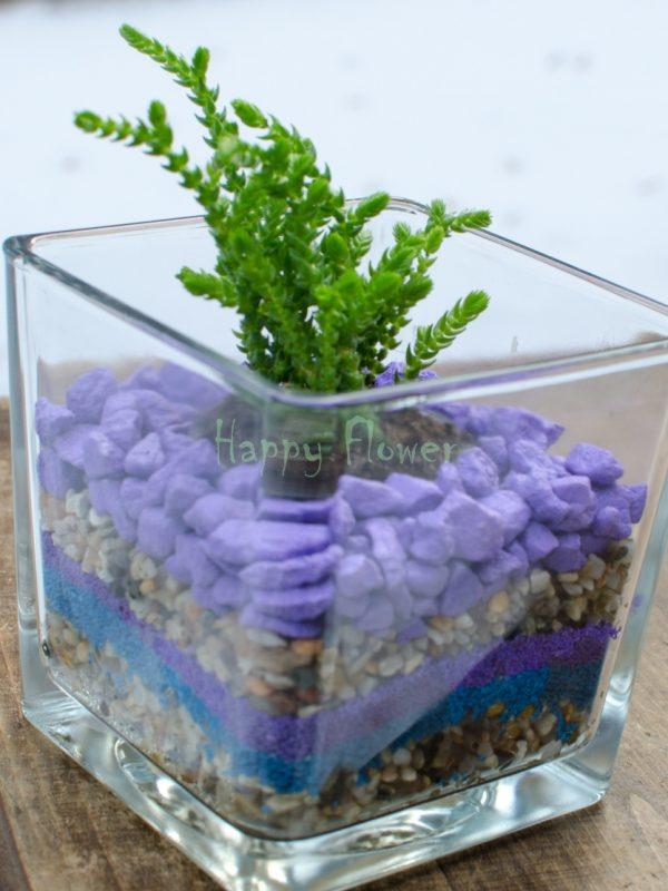 Planta suculenta in cub sticla