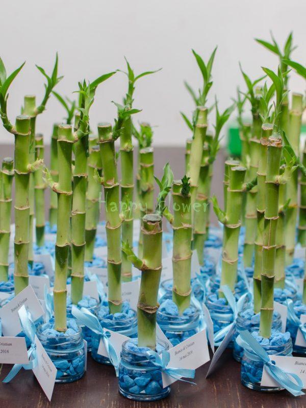 Marturii bambus pietricele bleu