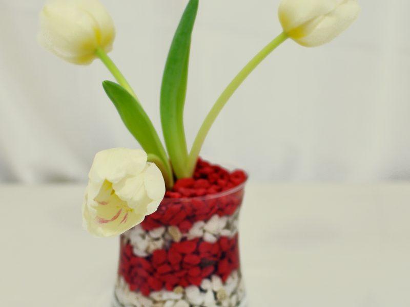 Aranjamente florale pentru 1-8 martie, lalele in vas sticla - Pret 40 Ron(TVA inclus);.jpg