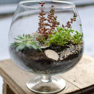 Aranjament cu plante suculente in cupa Brandy