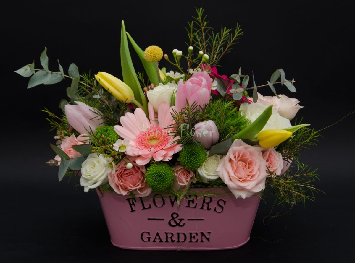 Jardiniera flori primavara, minigerbere, lalele, miniroze