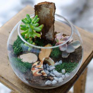 Terarariu plante suculente, canuta lut, scoarta copac