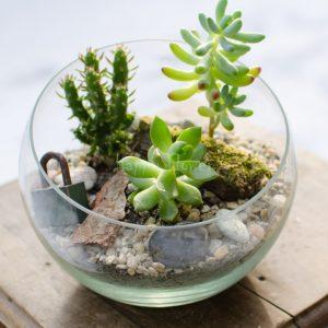 Terariu plante suculente, decor lacat