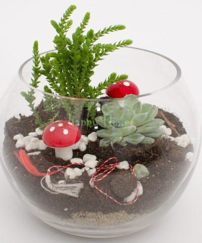 Terariu plante suculente si ciupercute
