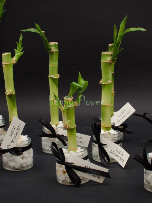 Marturii nunta botez bambus