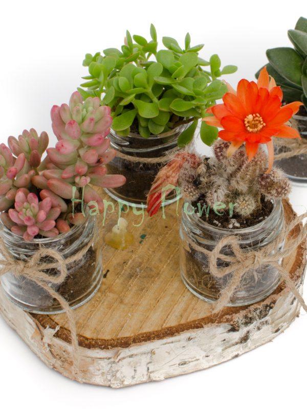 Marturii plante suculente in borcanel