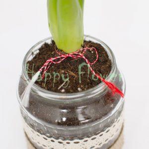 Zambila-borcan-decorat