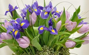 flori-1-martie