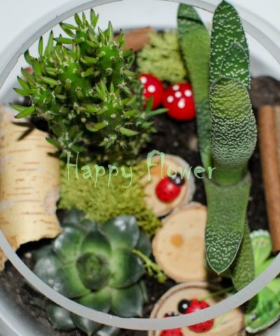 Terariu plante cu felii lemn, scortisoara, gargarite si fluturasi